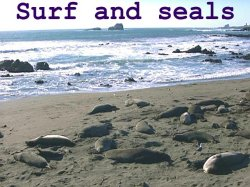 surf and seals
