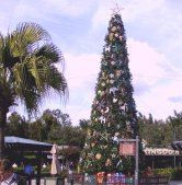 The Christmas tree at Animal Kingdom.