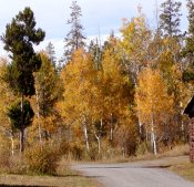 Fall brought on the beauty of  bright colors around the ranch.