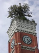 The Decatur County Courthouse has had a tree growing in the roof for many years.