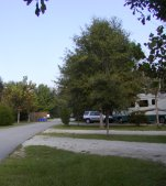 The park is quite large and well developed with a very attractive campground.