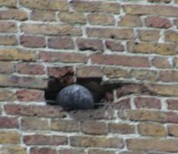 A cannon ball is still burried in the wall of an old house.